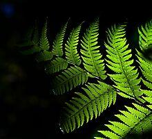 Fingertips of Light..... by GerryMac