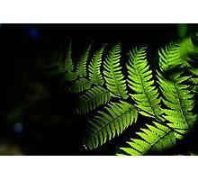 Fingertips of Light..... Photographic Print