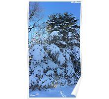 Snowy Tree Poster