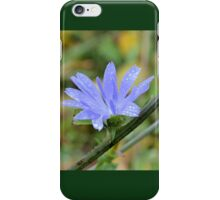Last Chickory Bloom iPhone Case/Skin