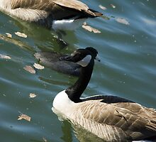 geese by studioepoch