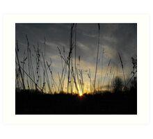 Setting Through the Reeds Art Print