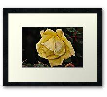 Yellow Rain Framed Print
