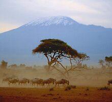 Wildebeest and Kilimanjaro by Nancy Barrett