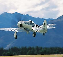 Hawker Sea  Fury by aircraft-photos