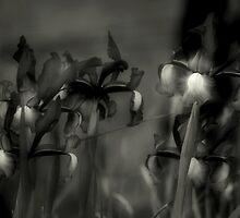 Iris by SuddenJim