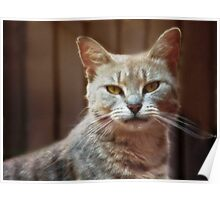 Fearless Feline Poster