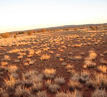 outback dawn by annettespiccys