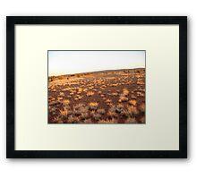 outback dawn Framed Print