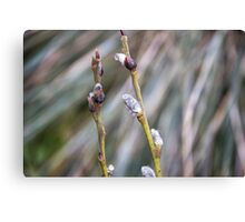 Rain pearls Canvas Print