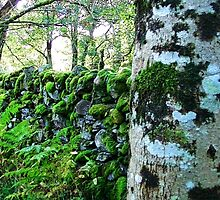Aira Force Waterfall Walk Stone Wall by Paul Evans