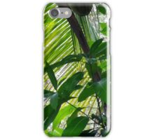Coconut Palm iPhone Case/Skin