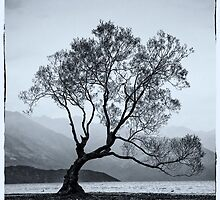 Lone tree Lake Wanaka by Karen Scrimes
