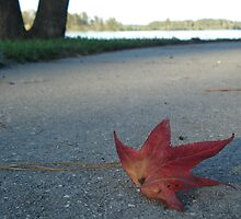red leaf by hollyallyn