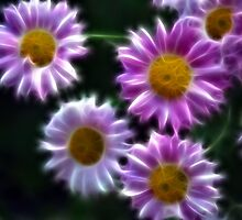 mums by marianne troia