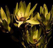 Floral Decay 5 by Alex Shiels