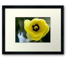 """I'm listening!"" ~ Hibiscus Tiliaceus Yellow Bloom  Framed Print"