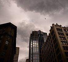 Birds Over Seattle by Alex Shiels