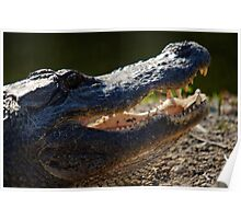 Toothy Grin Poster