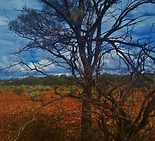 Dry Outback by AlwaysCapture