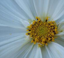 Dusted with Pollen by Sam McCabe