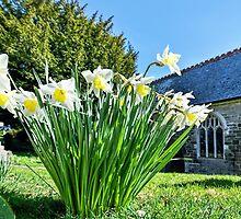 Daffodils At St Feock Church - Cornwall by Susie Peek