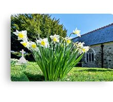 Daffodils At St Feock Church - Cornwall Canvas Print