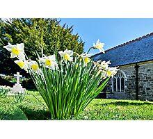 Daffodils At St Feock Church - Cornwall Photographic Print