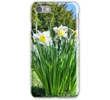 Daffodils At St Feock Church - Cornwall iPhone Case/Skin