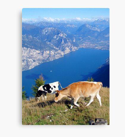 High Altitude Grazing, Monte Baldo / Lake Garda, Italy Canvas Print