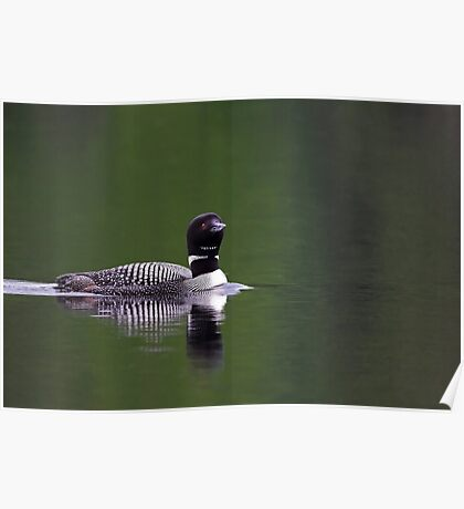 Lone Loon - Common Loon Poster