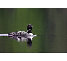 Lone Loon - Common Loon Photographic Print