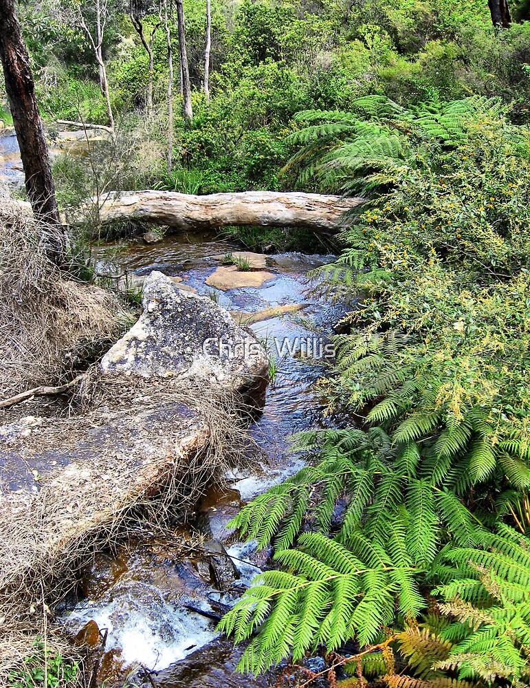 Creek at Araluen by Chris  Willis