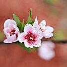Peach Tree Petals by Dana Yoachum