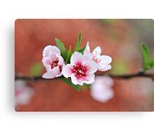 Peach Tree Petals Canvas Print