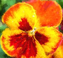 Spring Pansy by Cathy Donohoue