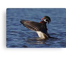 She went that away! - Wood Duck Canvas Print