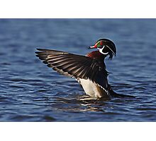 She went that away! - Wood Duck Photographic Print
