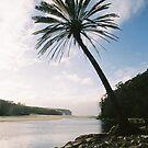 palm by ben reid