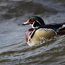 Ridin the Wave - Wood Duck by Jim Cumming
