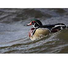 Ridin the Wave - Wood Duck Photographic Print