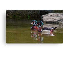 Wood Duck Buds Canvas Print
