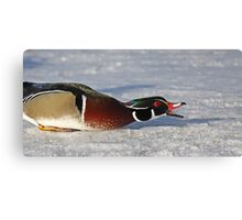 Protecting his territory - Wood Duck Canvas Print