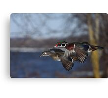 Together Forever - Wood Ducks Canvas Print