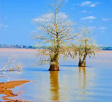Lake Marion, Santee State Park by DonnaM