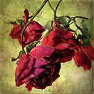 Vintage Rose by Jessica Jenney