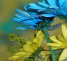 Blue and Gold Daisies by Sheri Nye