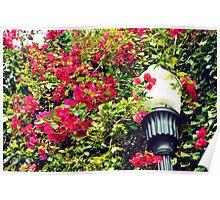 Lamp Post Red Flower Poster