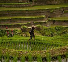 Tegalalang Rice Terrace by Lealaetitia