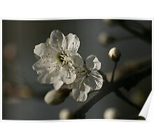 First Blossoms Poster